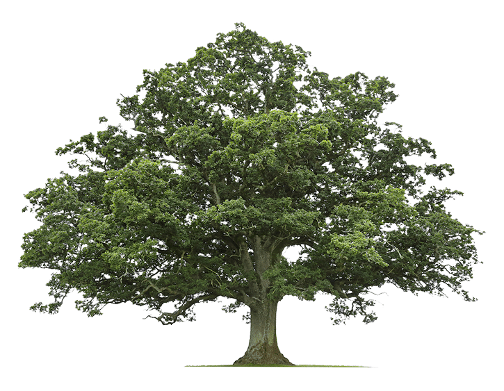 Tree-Planted-With-Every-Order_e4fc1dd3b44fd49c57aa7aaff365ff3b